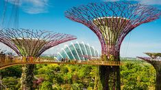 Gardens by the Bay - The Making of a Wonder | Garden of Wonders | BBC StoryWorks
