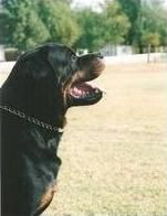 German Dog Commands - When, Why & How To Use Them