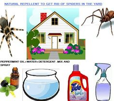 how to get rid of mosquitoes in my yard naturally