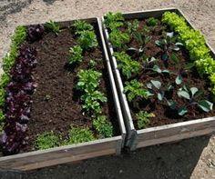 Raised Bed Gardens: The Perfect Way to Earn Your Green Thumb Growing Herbs Indoors, Starting Seeds Indoors, Plants For Raised Beds, Raised Garden Beds, Gardening For Beginners, Gardening Tips, Vegetable Garden Design, Organic Farming, Organic Gardening