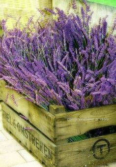 Oh Lavender, Sweet Lavender. I'd love to bury my nose and take a deep deep whiff.