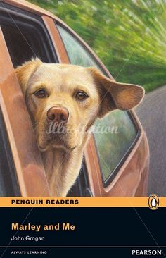 Illustration of dog from car window © Andrew Hutchinson