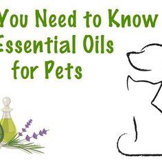 Dr. Melissa Shelton Talks About Essential Oils for Pets
