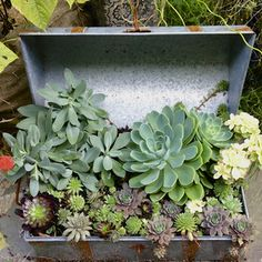 Make a Trunk into a Succulent Container Garden: Making a Succulent Planter in a Trunk