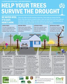 A couple weeks ago we shared wise watering guidelines to help our trees through the drought. This week we share even more ways you can help protect your trees from drought. California Drought, California Garden, Davey Tree, Tree Trimming Service, Us Forest Service, Gardening Zones, Gardening Tips, Lawn Maintenance, Tree Care