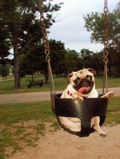 Ahh pug on a swing!!