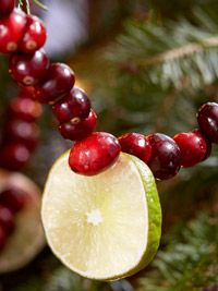 Fresh Cranberry and Lime Christmas Garland tutorial. I did this last year and loved it so much Im doing it again!