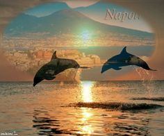 love,dolphines