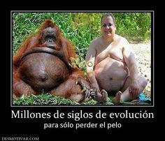 Millones de siglos de evolución para sólo perder el pelo