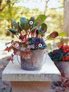 Sometimes stems can be more colorful than leaves. In this fall container idea, Swiss chard's eye-catching stems steal the show from the more muted hues of the foliage. #fallcontainergarden #containergardenplans #fallgardening #flowerpots #bhg Fall Container Plants, Fall Containers, Container Flowers, Container Gardening, Ornamental Cabbage, Ornamental Grasses, Flowering Kale, Fall Planters, Flowers