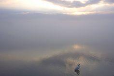 swans Ⅱ - 103456567741667898676 - Picasa ウェブ アルバム