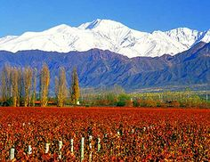 Malbec wine region in Mendoza, Argentina Art Du Vin, Places To Travel, Places To See, Travel Pics, Travel Ideas, Visit Argentina, Argentina Travel, Wine Country, Wonders Of The World