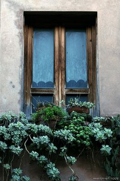 Rustic window box with mixed succulents Window Planters, Window Boxes, Window Sill, Window Parts, Little Gardens, Garden Windows, Window Dressings, Garden Features, Flower Boxes