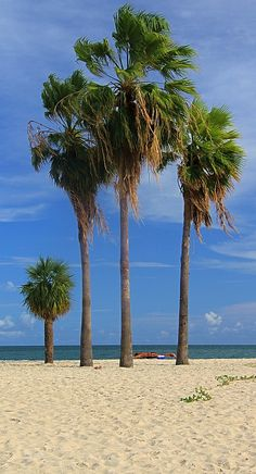 Sombrero Beach, Marathon Island, Florida Keys Copyright: Jean Saint Martin