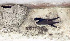 Tuto : construire un nid artificiel pour hirondelle de fenêtre