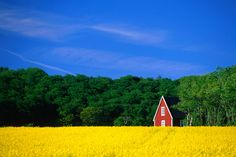 Rape field, Red House and forest, Kullaberg Skane.