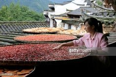 A woman tidies chillies and other harvests dried in the sun during China's First Cultural Festival for Autumn Harvests on June Sixth according to Chinese canlendar at Huangling Village of Wuyuan County on July 21, 2015 in Shangrao, Jiangxi Province of China. First Chinese Cultural Festival for Autumn Harvests opened on the sixth day of June in Chinese canlendar, aiming to intergrate traditional Chinese culture with eco-travel and arose nationals' passion on folk culture. It's said that the…