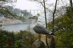 Nome: Gaivota Tamanho: 6,3 MP (3072x2048) Autor: Vitor Sousa Máquina: Canon EOS 300D Foto Original