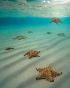 Starfish, Hawaii