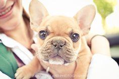 Rocky the French Bulldog!  So tiny!