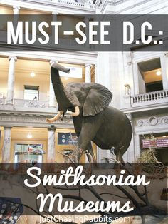 Must-See in D.C.: The Smithsonian Museums