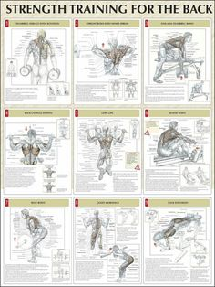 Build every muscle in the body - Album on Imgur