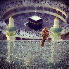 الله اكبر يارب اكتبلنا زياره بيتك الحرام