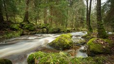 Landscape - Harz National Park