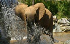 Zoo de la Flèche - Le Tertre Rouge, 72200 La Flèche