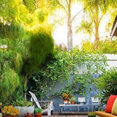 Un petit jardin verdoyant Salons, Aquarium, Plants, Gardens, Terraces, Colors, Goldfish Bowl, Lounges, Fish Tank