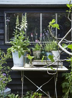 Books | Garden Style by Selina Lake...