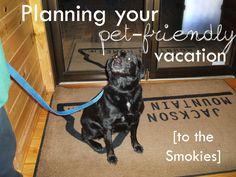 Planning Your Pet-Friendly Vacation in the Smokies