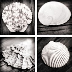 5x5 Sea Shell Photographic Collection | Bees and Buttercups Handmade Gift Shop / Panama City Florida