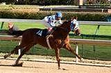 secretariat race horse - Yahoo Image Search Results
