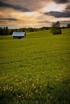 Jämtland, Meadow Meet by peter.