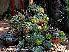 Cascading Succulents