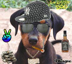 gangster dogs | gangster dog
