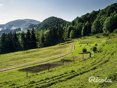 Ricola's beautiful herb garden on Trogberg mountain. #Herbgarden #Switzerland #Ricola