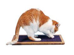 Cat Scratchers — hauspanther