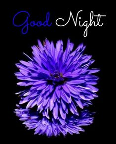 Good Night Flower Beautiful Good Night Images, I Love You Images, Good Night To You, Good Night Flowers, Good Morning Image Quotes, Buddha Quote, Beautiful Flowers Wallpapers, Inspiring Quotes About Life, Flower Wallpaper