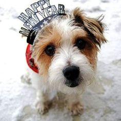 Happy 2013 New Year Dog