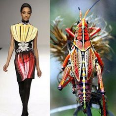 Fashion inspired by animals and insects