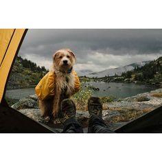 hikingdreams:    Credit: http://ift.tt/2ciOxWt  The Best of Bushcraft and Survival - http://ift.tt/2lhc8iK