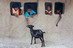 'Friends' by Satyajit Saha, taken in India. A goat is being fed by young children through makeshift windows