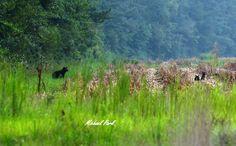 https://flic.kr/p/MvH3b9 | IMG_0318 | mama bear watching cubs
