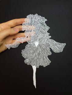 Handcut paper by Maude White bravebirdpaperart.com