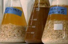 WATCH: Inside The Fermentation Labs At David Chang's Momofuku Restaurants