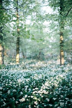 * Spring forest (no location given) by Abbie Mellė 🌲 Pinterest Photography, Photography Photos, Landscape Photography, Nature Photography, Photography Flowers, Spring Aesthetic, Nature Aesthetic, Spring Forest, Spring Nature