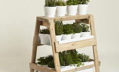 Handy herbage