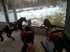 Oh, that's right! Red and Pharoah, you guys haven't been out in the snow before! Go show them around Harley!